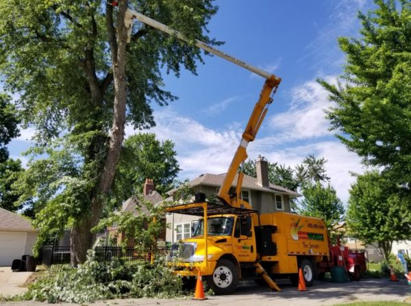 Longmont Tree Service